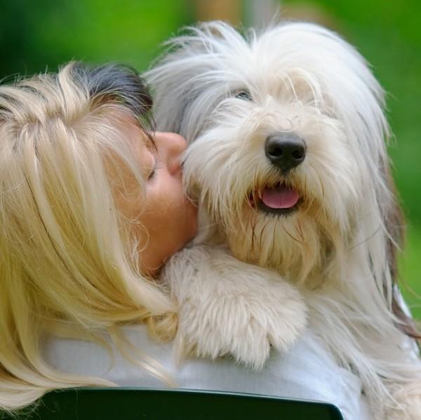 一人暮らしで犬を飼うことを検討中のあなたが考慮すべき7つのこと