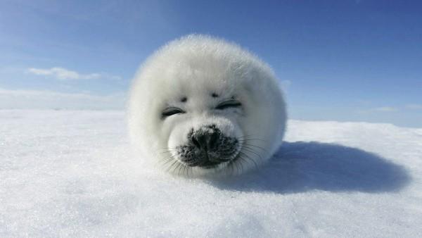 お間抜けな動物たちが超可愛い、癒し画像20連発☆