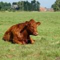 食後の睡眠は牛になる、は本当?食後の睡眠7つのリスク