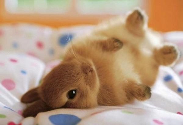 癒しの動物が満載☆疲れが吹き飛ぶ、ふわふわ動物11画像♪