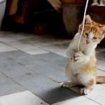 【癒し画像】可愛いだけじゃない、クスッと笑える動物たち11連発