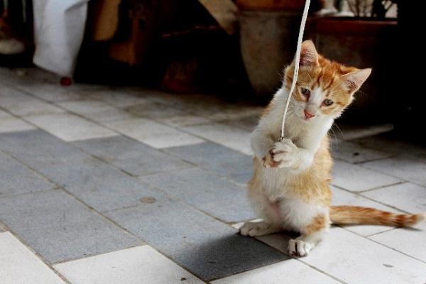 癒し画像】可愛いだけじゃない、クスッと笑える動物たち11連発